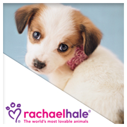 Rachael Hale Stickers