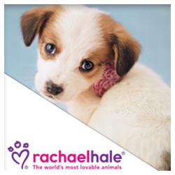 Rachael Hale Toys