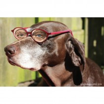 Dog with Glasses Recall Cards