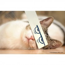 Cartoon Cat Eyes Recall Cards