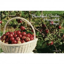 Apple Harvest Recall Cards
