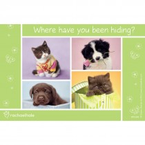 Rachael Hale Where Have You Been Hiding Recall Cards