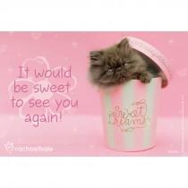 Rachael Hale Sweet Pink Cat Recall Cards