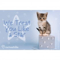 Rachael Hale Cat Treat You Like A Star Recall Cards