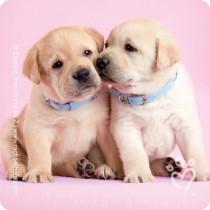 Rachael Hale® Valentine Stickers