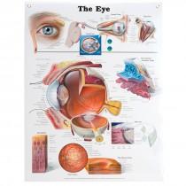 Anatomical Eye Chart:  Anatomy of the Eye