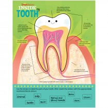Parts of a Tooth Sticker Activity Sheets