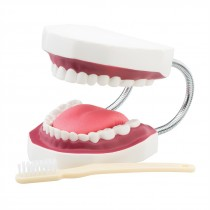 Large Dental Care Model