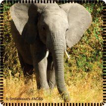 Favorite Animals Stickers