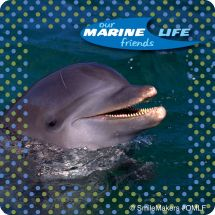 Our Marine Life Friends Stickers