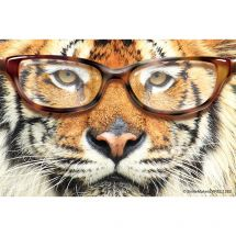 Tiger with Glasses Recall Cards