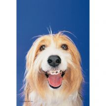 Dogs with Braces Recall Cards