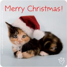 Rachael Hale Cats Christmas Stickers