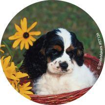 Baby Animals Stickers